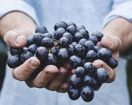 Uva garnacha-vinos de la tierra de Castilla y León
